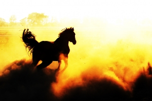 wild-horse-1421778-m