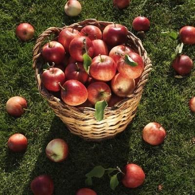 äppelpaj 2